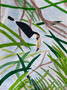 Ellie Todd's Toucan.png