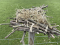 nest2.png