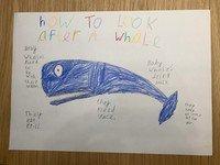Fox whale poster.jpg