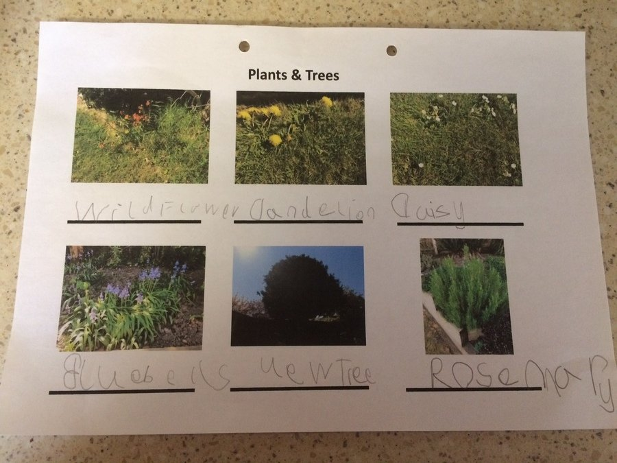 Amber B identifying plants and trees