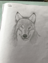 Y6 T wolf.png