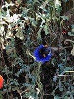 NB flower bee.jpg
