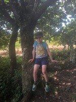 NB tree.jpg