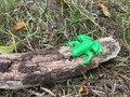 frog homes (60).JPG