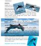 Rafia-Dolphin.png