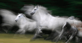 Wild Horses Pobble.png