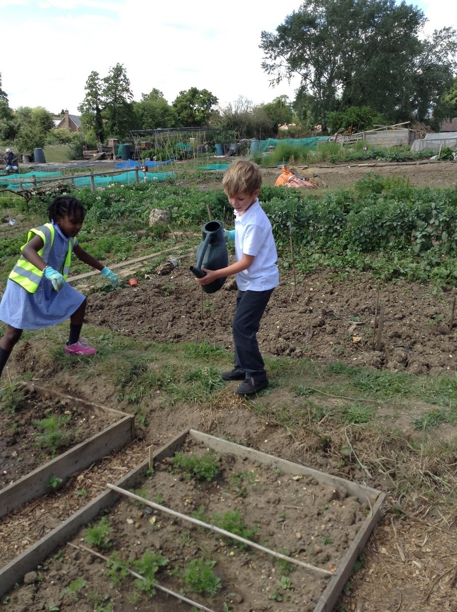 Y1 Children having fun watering the plants at Sedley's allotment