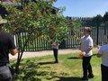 Picking cherries 5.jpg