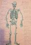 Skel (2).png