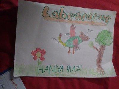 By Haniya