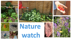 nature watch.png