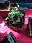 OR plants 2.jpg