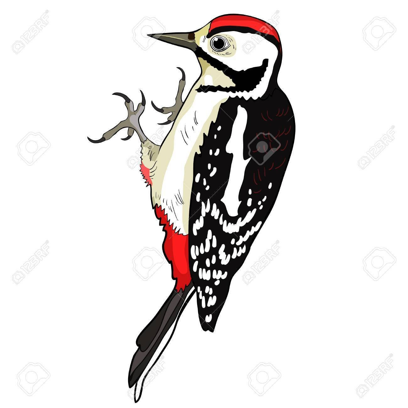 Image result for woodpeckers clipart