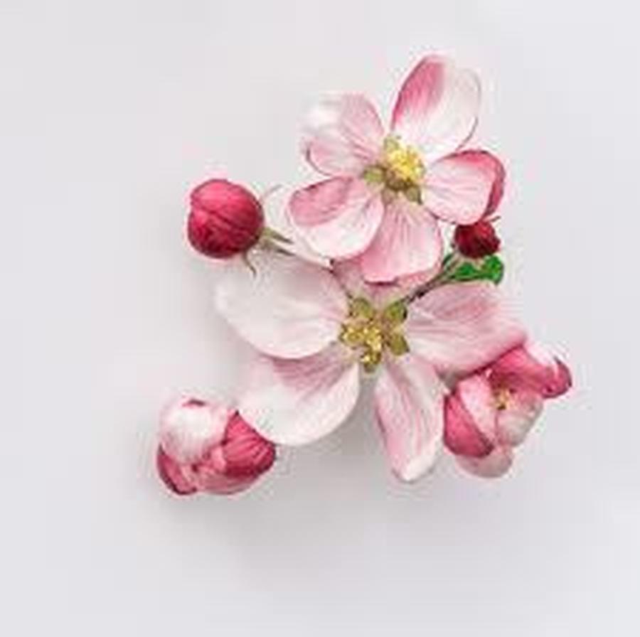 Blossom Class (Reception)