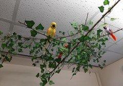 Classroom birds.jpg