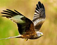 Sparrow Hawks Year 6