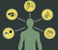 Five senses image.PNG