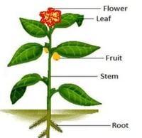 plant image - The Secret sjy garden.PNG