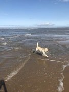 Bramble at beach 2.JPEG
