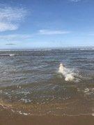 Bramble at beach 3.JPEG
