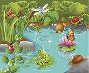 Pond Creatures.jpg