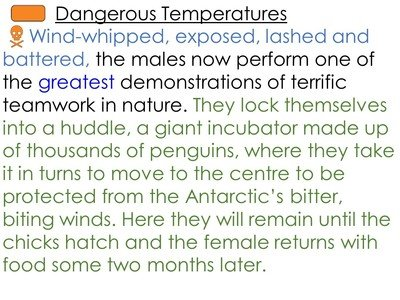Penguins 8A.JPG