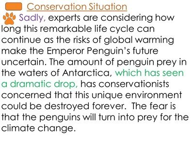 Penguins 10A.jpg