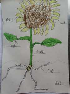 Edie's Sunflower