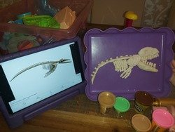 Beau's skeleton.jpg