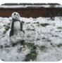 Yr 2 Snowman.png