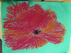 Edward's poppy