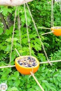 bird feeder 4.jpg