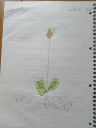 Oscar Flower.jpg