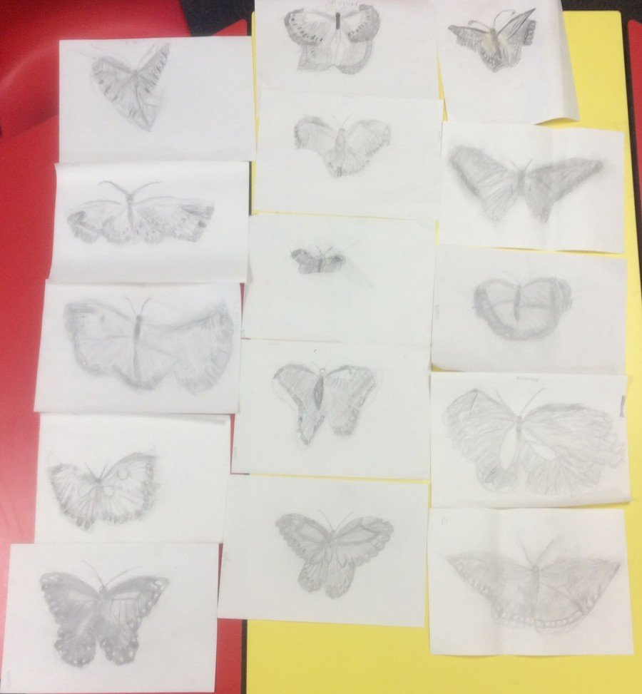 Butterfly pencil sketches