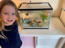 Grace & Sebbie got a pet fish