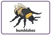 Animal Rhymes - bee.jpg