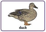 Animal Rhymes - duck.jpg