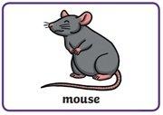 Animal Rhymes - mouse.jpg