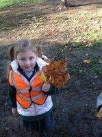 leaf collection.jpg