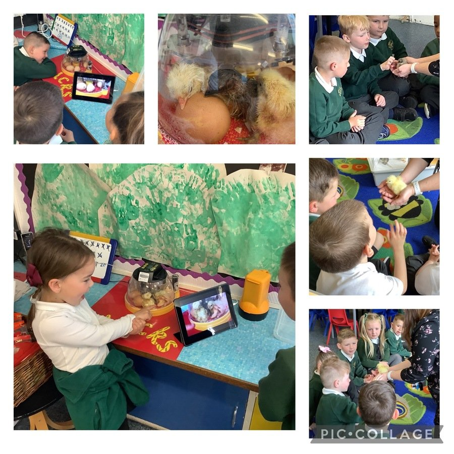 Reception have been incubating eggs!