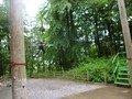 swing (13).JPG
