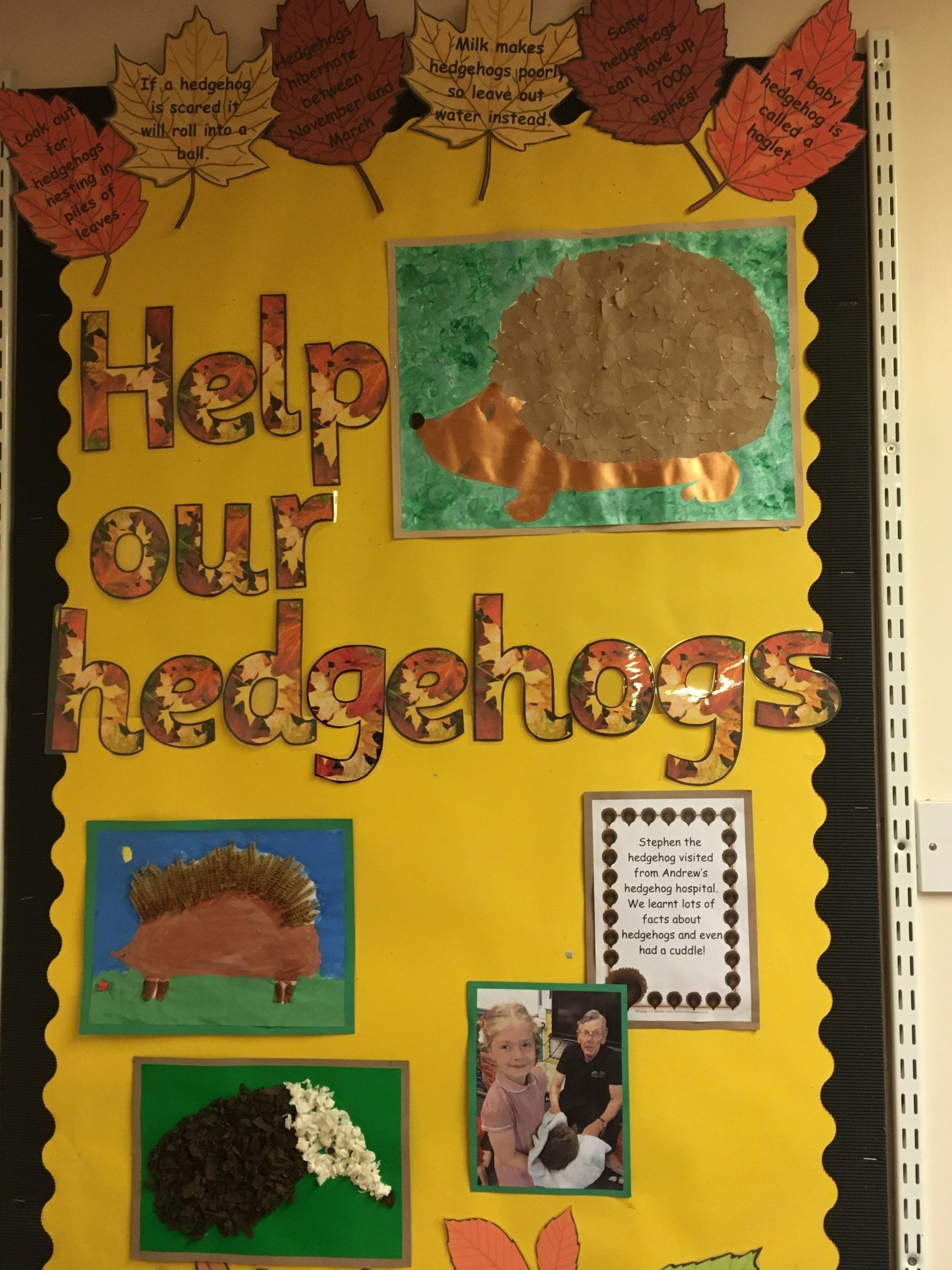 Help the Hedgehogs Campaign