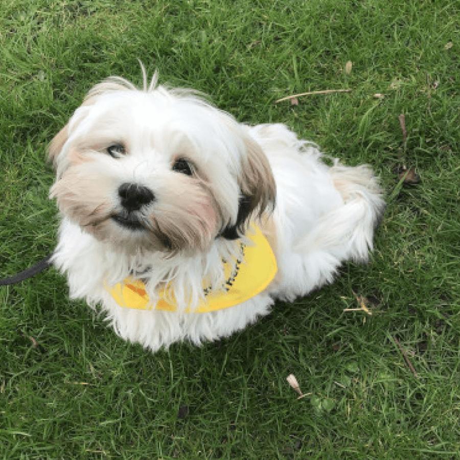Our School Dog Lola