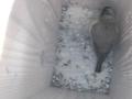 birdbox2014.png