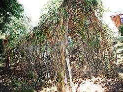Forset Garden.jpg
