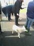 lambs 015.jpg