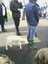 lambs 016.jpg