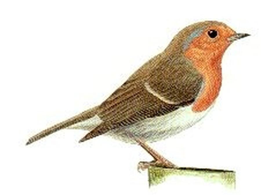 Robins - Y1