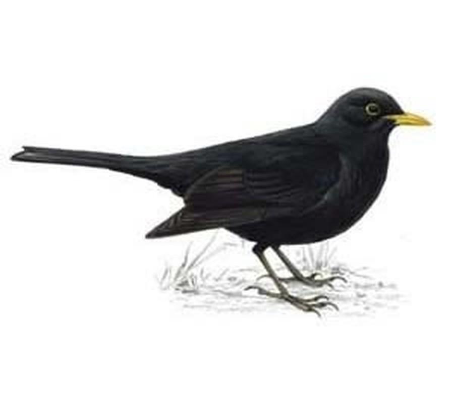 Blackbirds - Y2