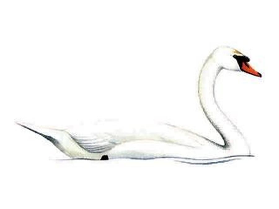 Swans - Y4